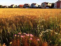 Blumen am Feldrand von Xenia Wilk