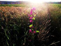 Blume am Feldrand by Xenia Wilk