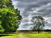 Landschaft am Niederrhein von maja-310