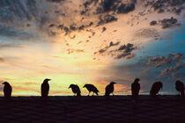 Raben im Sonnenuntergang von jumes