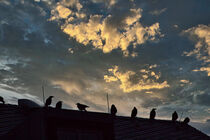 Raben auf dem Dach von jumes