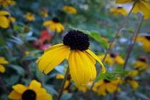 Little yellow flower by feiermar
