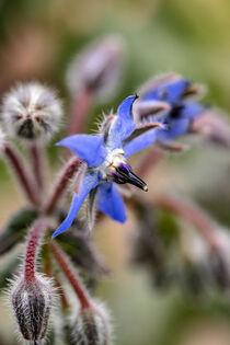 Schmackhafte Blüte by Harald Schottner