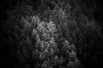 forest in black and white  by whiterabbitphoto