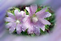 Bright purple by feiermar