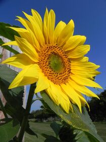 Sunshine by O.L.Sanders Photography