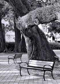 Park Bench von O.L.Sanders Photography