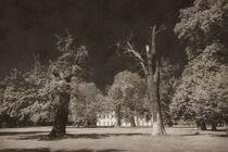 Im Park von Schloss Schoenhausen by Christian Behring