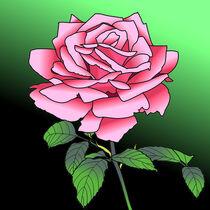 Rose von Christian Woschek