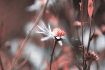 Blüten 003 von Carmen Varo