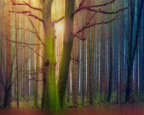Magic in the Forest by Edmund Nagele F.R.P.S.