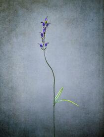 Bent Flower Stem von William Schmid