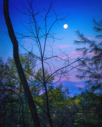 The Moon, The Mountains & The Trees by William Schmid