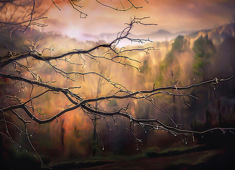 Branches-dew-sun-end