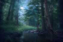 Forest creek in the morning von William Schmid