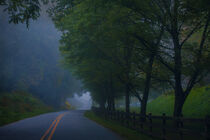 North Carolina Misty  by William Schmid