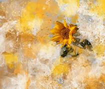 Here comes the sun von Anne Seltmann