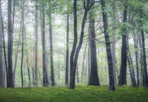 Misty Trees by William Schmid