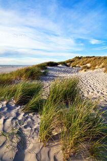 Magische Sanddüne an der Dänischen Küste in Jutland von captainsilva
