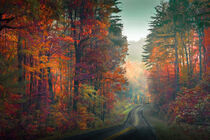 Adirondack Autumn  by William Schmid