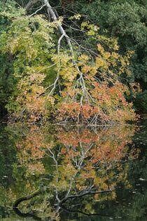 Spiegelbild: Bunter Herbstbaum by Anja  Bagunk