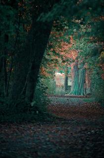 The hidden tree von Ingo Menhard