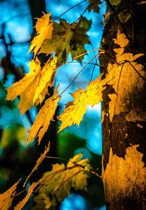 Autumn leafs by Ingo Menhard