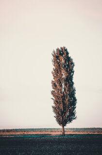 Tree cannon von Ingo Menhard