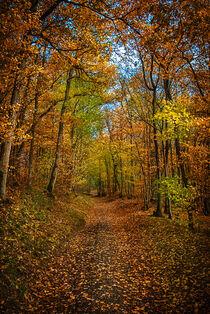 Forest in autumn von Iryna Mathes