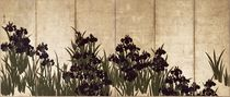 Irises  von Ogata Korin