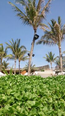 Green Beach von sahala alberto