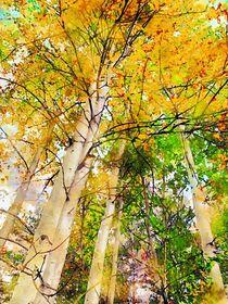 Baumkrone mit buntem Laub im Herbst. Eschen von havelmomente