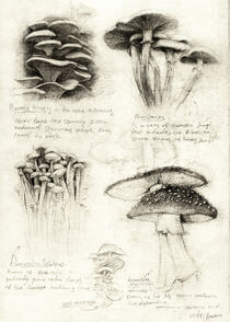 Mushrooms by Mike Koubou