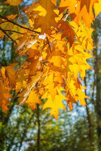 Gelbe Blätter by Iryna Mathes