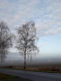 Wenn der Tag aus dem Nebel erwacht III von Anja  Bagunk