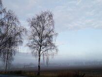 Wenn der Tag aus dem Nebel erwacht I by Anja  Bagunk