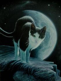 Katze im Mondschein von Ridzard  König