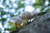 Herbstpilze von Kilian Schloemp