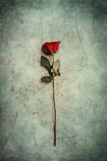 Grunge Rose And Papers by Phil Perkins