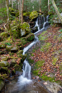 Small Waterfall In Forest von Phil Perkins