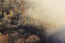 Herbstliche Bäume am Fuße des Hohenkrähens - Hegau von Christine Horn