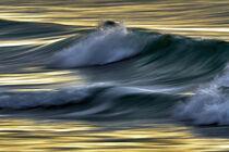 'Welle im Abendlicht' von Bodo Balzer