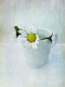 Daisy by Anne Seltmann