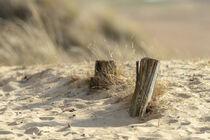 Hölzer im Sand von kiwar