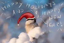 A little bird wishes Happy Holidays and a Happy New Year by Intensivelight Panorama-Edition