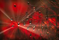Red color burst von William Schmid