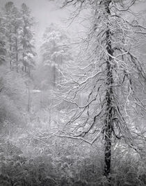 North Carolina Snow by William Schmid