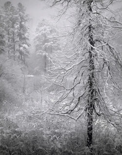 Snowy-bench-tree-two-10