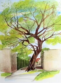 Alter Maulbeerbaum auf dem Weg zur Burg Querfurt von Heike Jäschke
