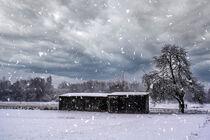 Walk through a snowy landscape by Michael Naegele